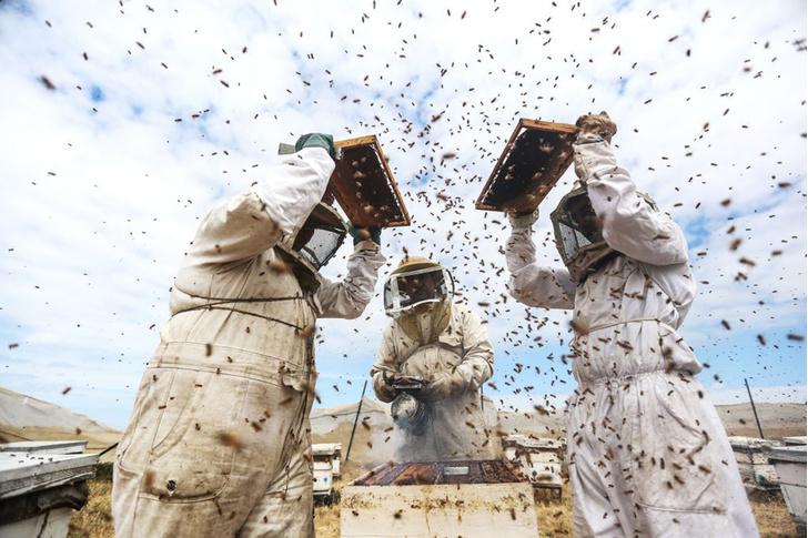 Фото №1 - Пчеловодство в Газе