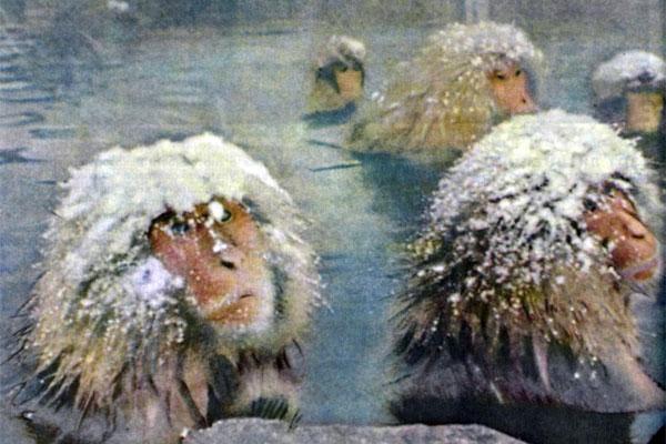 Фото №1 - Снежные чудаки