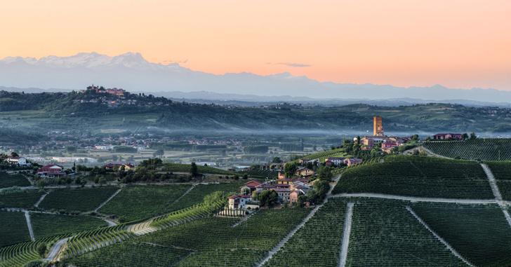 Фото №1 - Соседи по винограднику: борьба Бароло и Барбареско
