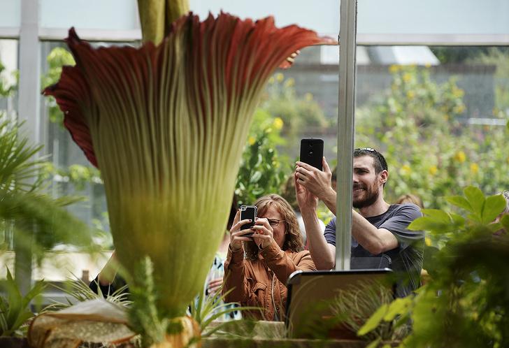 Фото №1 - Гигантский цветок