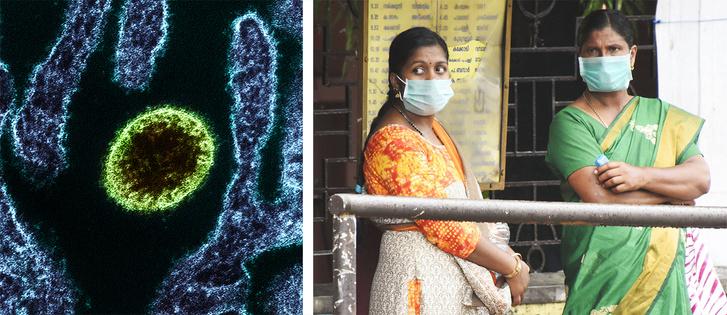 Фото №2 - В Индии выявили вспышку нового опасного вируса