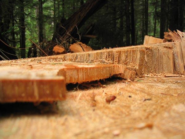 Фото №1 - Край леса