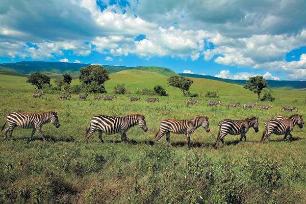 Фото №1 - Жемчужина Танзании
