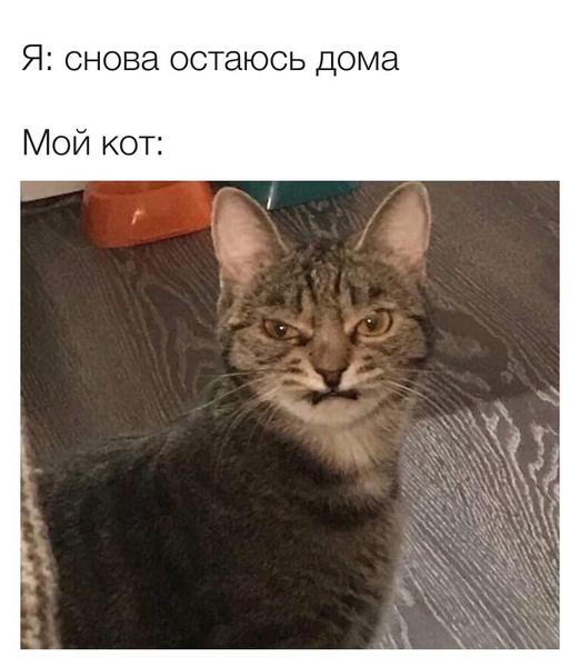 Фото №4 - 30 самых смешных мемов про карантин, которые мы собрали в интернете