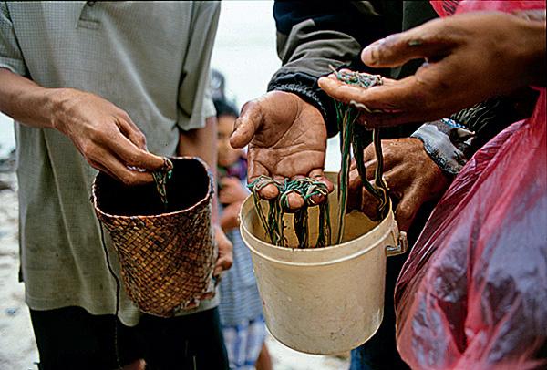 Фото №7 - Кровавый урожай