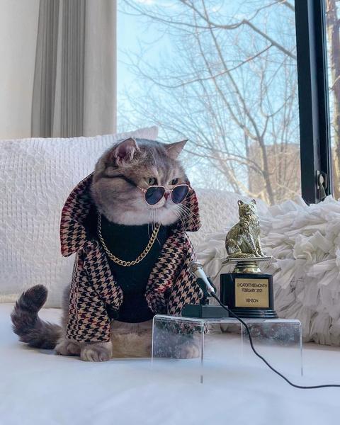 Фото №20 - Инста дня: Этот кот про моду знает больше, чем ты 😂