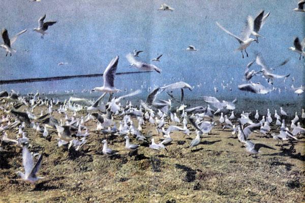 Фото №1 - Острова в заливе