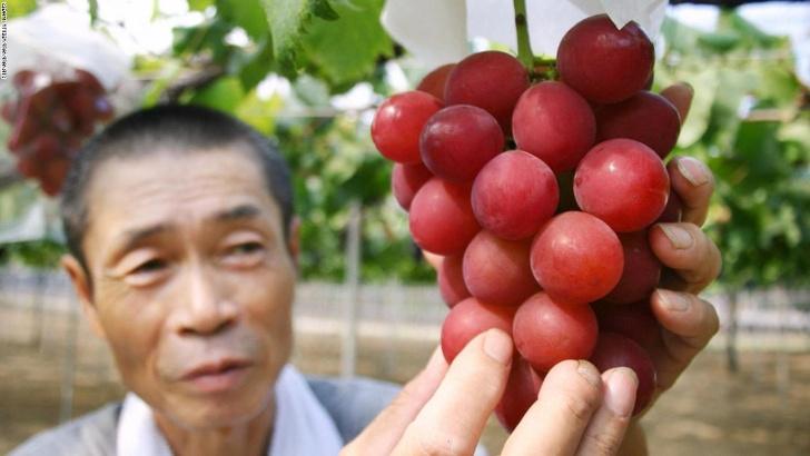 Фото №1 - Угощайся: самый дорогой виноград в мире, который стоит 11 000 долларов за гроздь