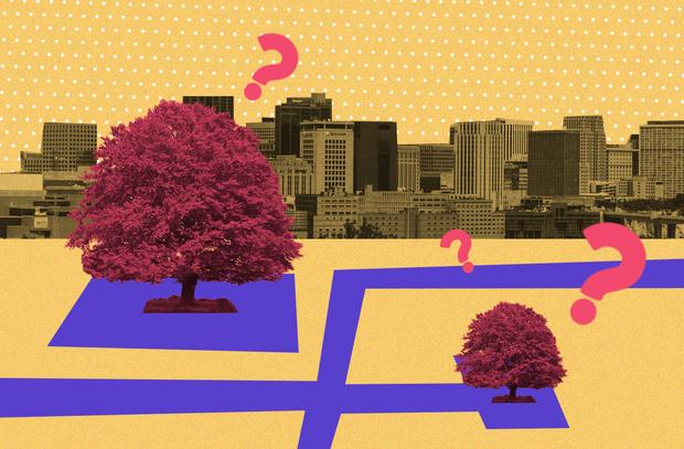 Фото №5 - Деревья в городе: как и для чего озеленяют общественные пространства
