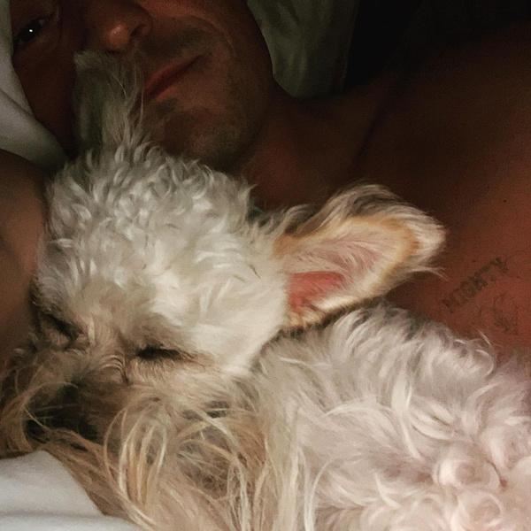 знаменитости звезды с домашними животными собаками щенками