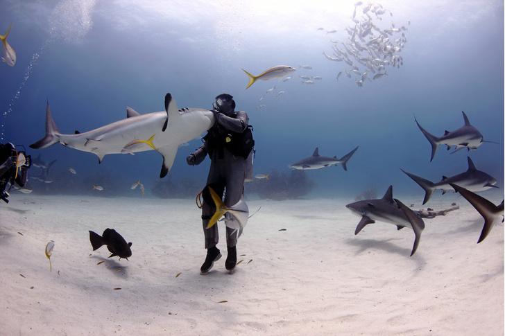Фото №1 - Заклинатель акул