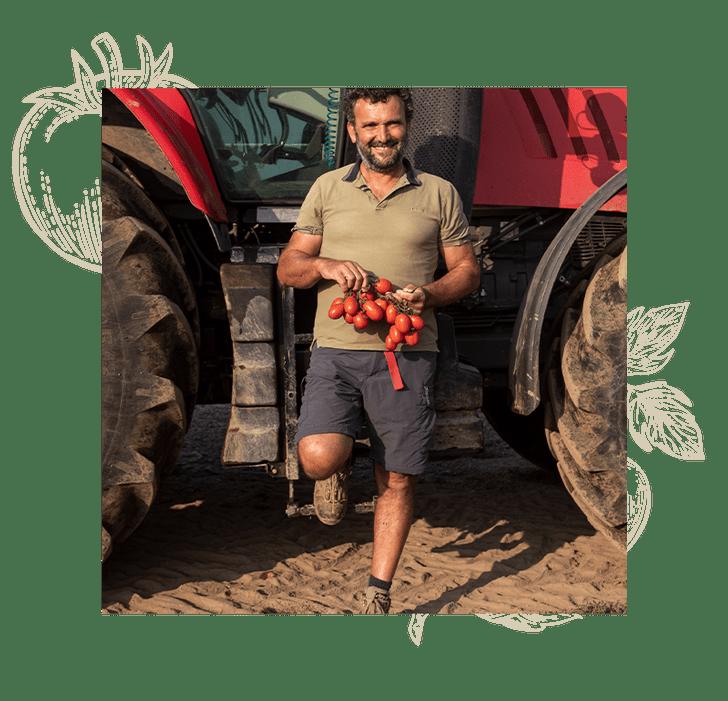 Фото №3 - Итальянские краски: как красные помидоры становятся «Золотыми томатами»