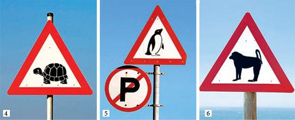 Фото №2 - Осторожно: пингвины!