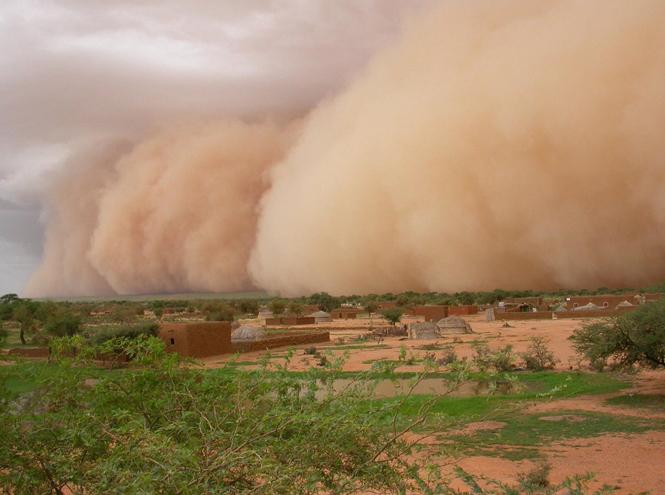 Фото №29 - С севера на юг: парфюмерное путешествие по Африке