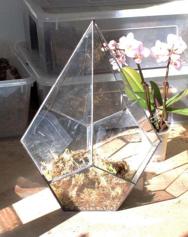Фото №5 - Весенний флорариум с орхидеей: советы по изготовлению и уходу