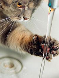 Фото №1 - Почему кошки боятся воды?
