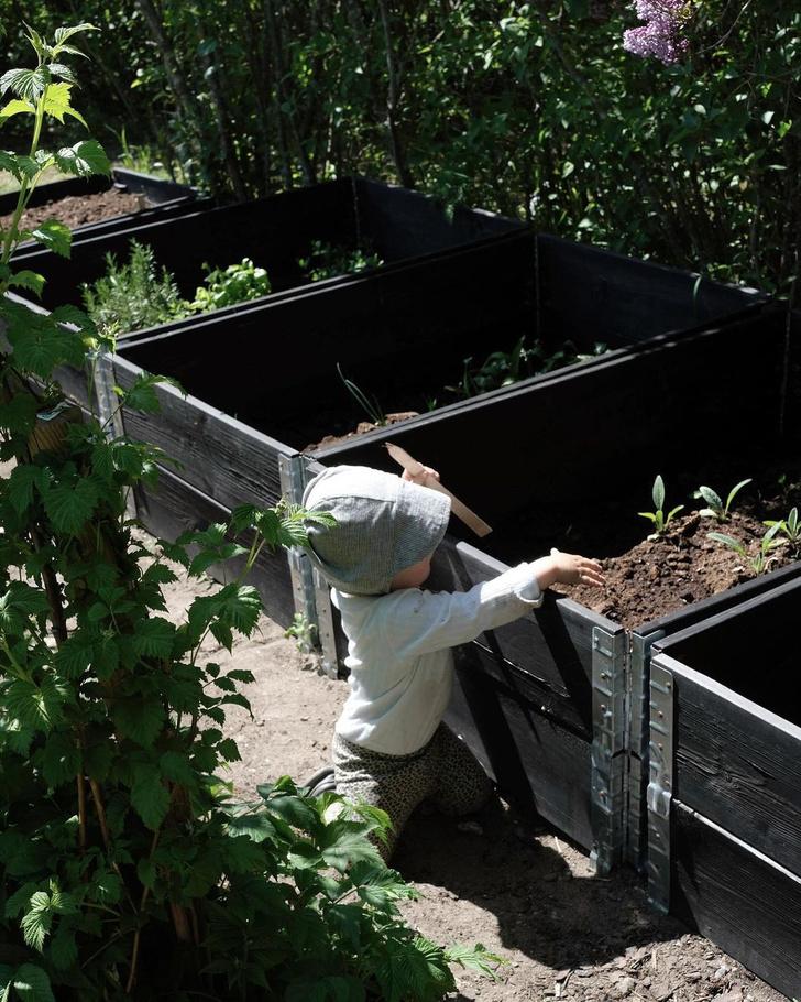 Фото №2 - Огород в ящике: полезные советы для дачи и балкона