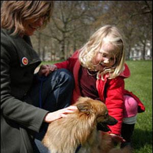 Фото №1 - Собаки напрокат