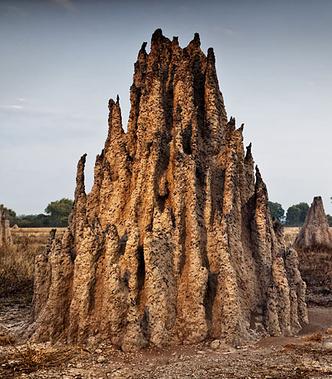 Фото №2 - Древние архитекторы: в чем термиты превзошли человека