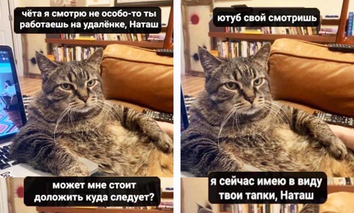 Фото №1 - Лучшие мемы про котов со всего Интернета
