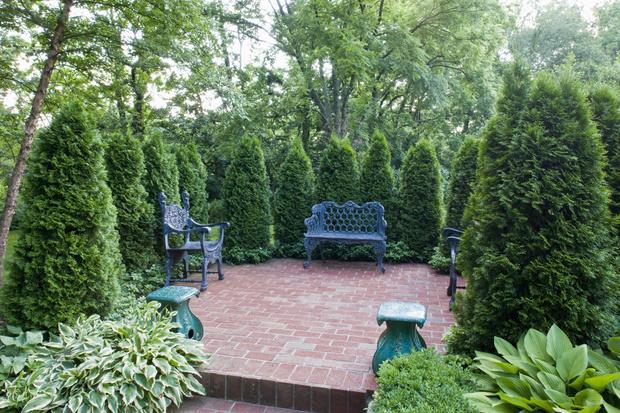 Фото №2 - Какие деревья нельзя сажать рядом с домом