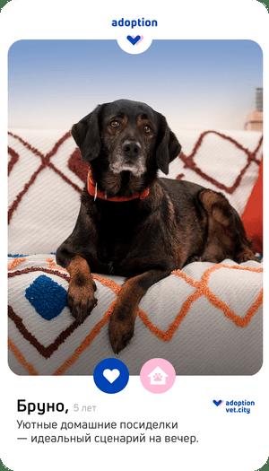 Фото №4 - Любовь в один клик: что такое pet-дейтинг, и как он поможет найти идеального питомца