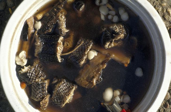 Фото №1 - Кулинарный экстрим: 6 «живых» блюд, которые рискнет попробовать не каждый