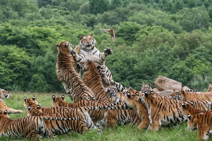 Фото №1 - Короли охоты