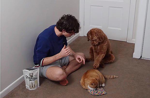 Фото №1 - Парень показал, как он научил свою собаку гладить своего кота (видео)