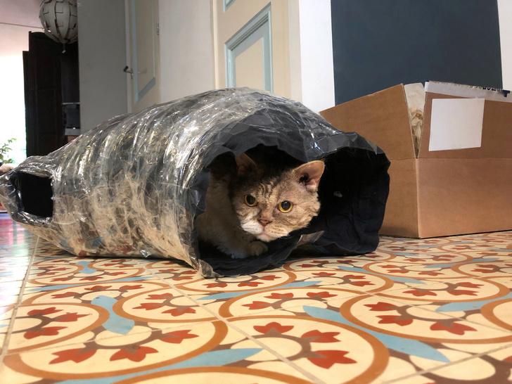 Фото №3 - 12 вещей, которые раздражают твоего кота