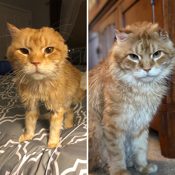 Фото №6 - Дом меняет все: 35 фото котиков до и после усыновления
