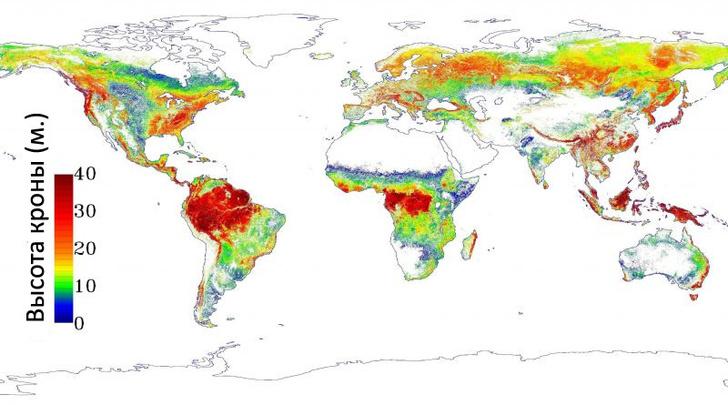 Фото №2 - Мировая карта высоты деревьев