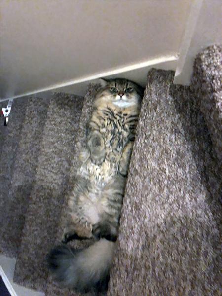 Фото №4 - Ни капли раскаяния: 30 страшных кошачьих преступлений— фото