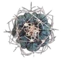 Фото №6 - Тест: Выбери кактус, и мы скажем, насколько ты колючая 🌵