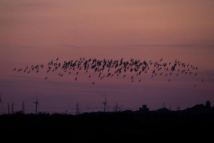 Фото №1 - Перелетные птицы
