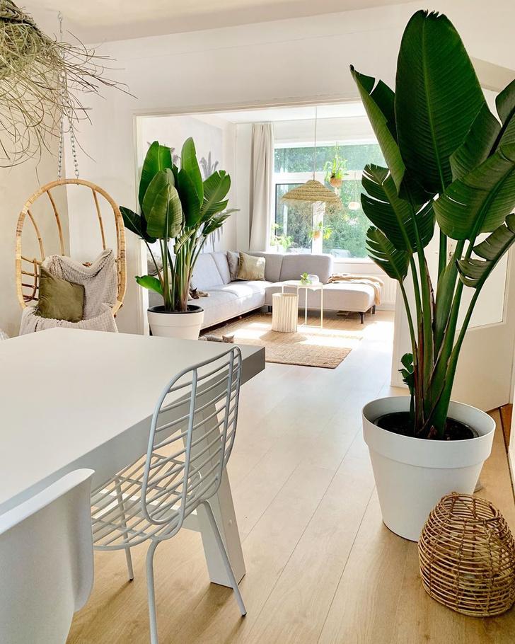 Фото №4 - Тренды 2020: самые модные комнатные растения