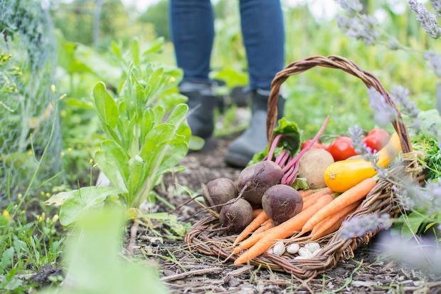 Фото №2 - Долгожители: 10 овощей, которые можно хранить месяцами