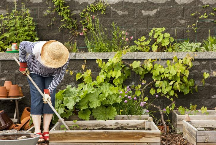 Фото №2 - 7 ошибок, которые совершают даже опытные садоводы