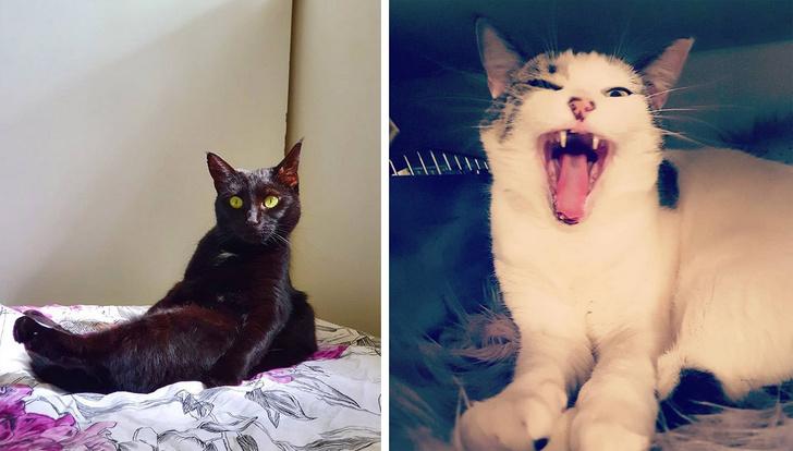 Кошки Микаэлы: Пеппер и Сода Поп