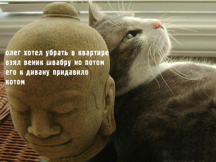 Фото №3 - Неожиданный лайфхак для владельцев слишком назойливых кошек