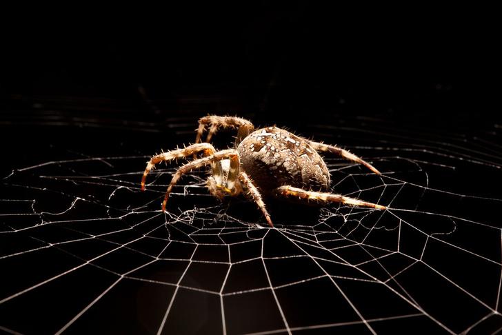 Фото №1 - Найден новый способ лечения боязни пауков и других фобий