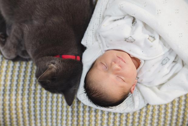 Фото №2 - 5 причин, почему брать в постель кошку и собаку - плохая идея