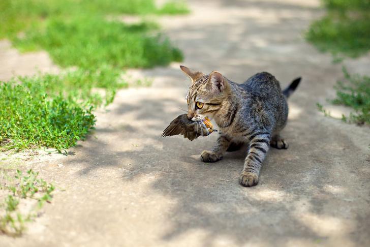 Фото №3 - Домашних кошек причислили к природным бедствиям