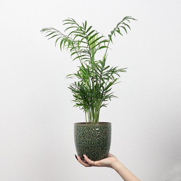 Фото №7 - Лучшие растения для спальни: советы по выбору и уходу