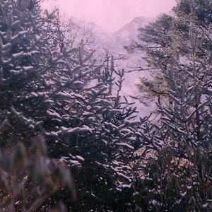 Фото №1 - Заснеженные леса повышают градус