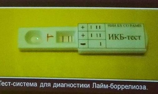 Фото №1 - Ученые создали первый в России экспресс-тест на клещевые инфекции