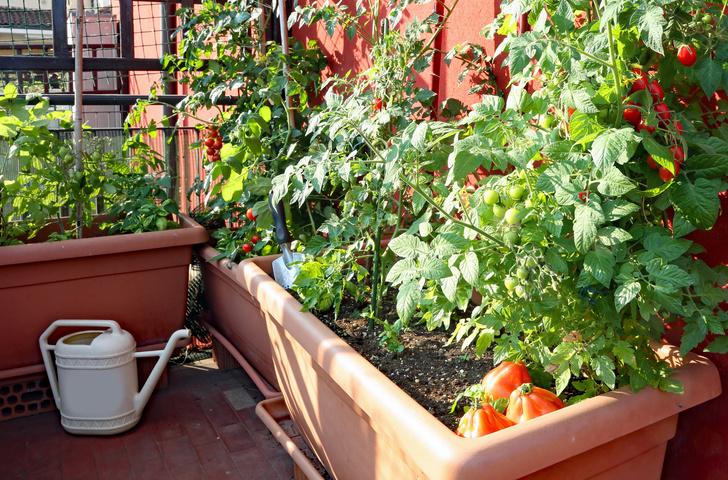 Фото №3 - Травы, овощи, цветы: как устроить мини-сад на балконе