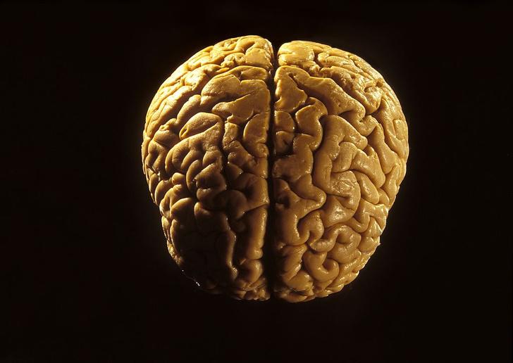 Фото №1 - Определены отвечающие за импульсивность области мозга