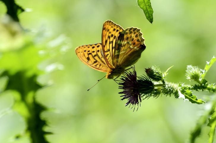 Фото №1 - Зоология: бабочки в трубе