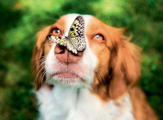 Фото №1 - Полет фантазии: репортаж с фермы бабочек в Малайзии